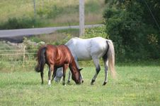 Free Two Horses In Field 3 Stock Photography - 1104032