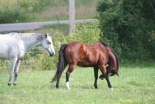 Free Two Horses In Field 4 Royalty Free Stock Photography - 1104037