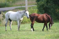 Free Two Horses In Field 5 Royalty Free Stock Images - 1104039