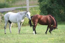 Free Two Horses In Field 6 Stock Photography - 1104042
