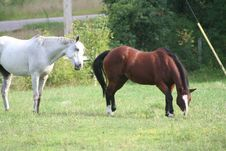 Free Two Horses In Field 7 Stock Images - 1104044
