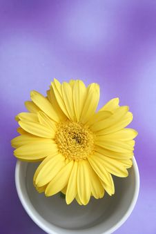 Free Daisy Stock Images - 1104104