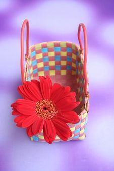 Free Daisy & Basket Stock Photos - 1104123