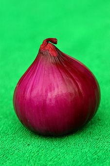 Red Onion Zoomed Stock Image