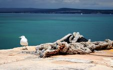 Free Seagull By The Sea Stock Photo - 1108770