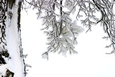 Free Branches In Snow Royalty Free Stock Photo - 1109885
