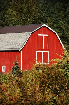 Free Red Wooden Barn Royalty Free Stock Photo - 11004405