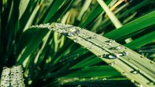 Free Water Drops On Green Leaf Plants Stock Images - 110046944