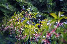 Free Green And Pink Leafy Plant Royalty Free Stock Images - 110046999