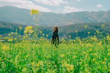 Free Man Standing On Yellow Bed Of Flowers Royalty Free Stock Images - 110047059