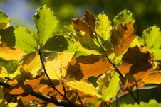 Free Colorful Autumn Leaves Royalty Free Stock Image - 11013596