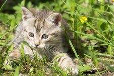Free Tabby Kitten Play Outside Stock Photo - 110137780