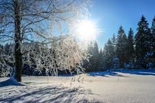 Free Snow Covered Pine Trees At Daytime Stock Image - 110174351