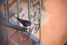Free Blue And Black Bird On Top Of Metal Frame Stock Photography - 110174372