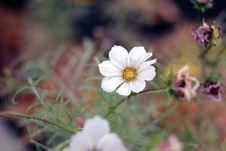 Free White Petaled Flower Stock Images - 110174454