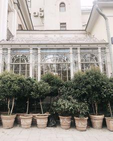 Free Green Outdoor Plants Near White House Royalty Free Stock Photos - 110174478