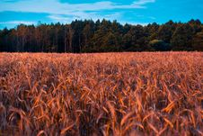 Free Cropland Stock Photos - 110174483