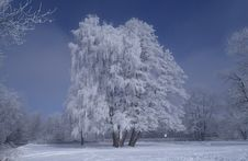 Free Tree Covered By Snow Stock Images - 110248464