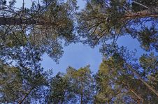 Free Green Leafed Trees Royalty Free Stock Photos - 110248508