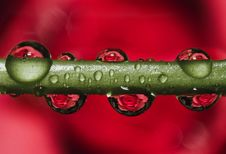 Free Green Stem With Dew Droplets Stock Photography - 110248522