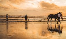 Free Two Horses On The Beach Stock Image - 110248601