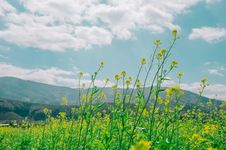 Free Low Angle Photography Of Nature Under Cloudy Sky Royalty Free Stock Photography - 110248627