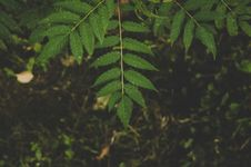 Free Green Leafed Tree Stock Image - 110418031