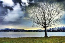 Free Silhouette Of Leafless Tree Beside Water During Cloudy Sky Royalty Free Stock Photo - 110418055