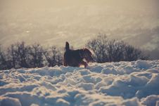 Free Photography Of Long-coated Brown Dog Standing On Snow Covered Floor Stock Photography - 110418162