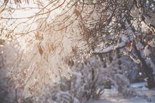 Free Closeup Photo Of Tree Branch With Snow Royalty Free Stock Photos - 110418168