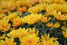 Free Flower, Yellow, Flowering Plant, Plant Stock Image - 110461641