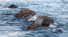 Free Seabird, Sea, Fauna, Bird Stock Photography - 110461642