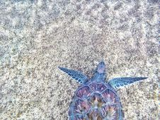 Free Purple And Blue Sea Turtle Stock Photo - 110501090