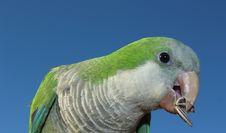 Free Beak, Bird, Fauna, Green Royalty Free Stock Image - 110548166