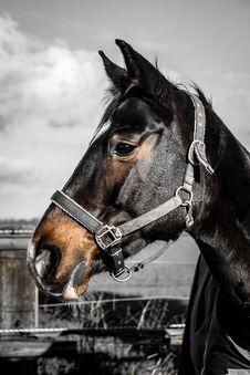 Free Horse, Bridle, Halter, Horse Tack Royalty Free Stock Photos - 110548338