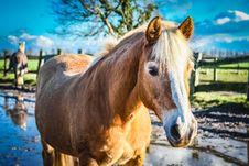 Free Horse, Mane, Horse Like Mammal, Mustang Horse Royalty Free Stock Photos - 110548558