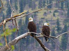 Free Bird, Eagle, Ecosystem, Bird Of Prey Stock Photos - 110549013