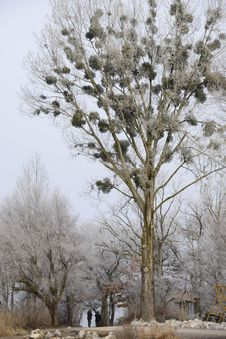 Free Tree, Winter, Branch, Frost Royalty Free Stock Photo - 110549705