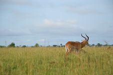 Free Wildlife, Grassland, Ecosystem, Fauna Royalty Free Stock Photography - 110550087