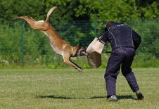 Free Grass, Lure Coursing, Obedience Trial, Animal Sports Stock Photography - 110550812