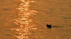 Free Reflection, Water, Water Bird, Bird Royalty Free Stock Photo - 110550945