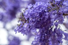 Free Blue, Branch, Flower, Purple Royalty Free Stock Image - 110551126
