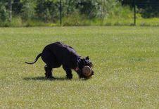 Free Dog Like Mammal, Dog, Grass, Dog Breed Stock Photos - 110551133