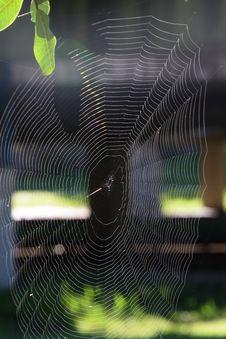 Free Spider Web, Close Up, Invertebrate, Line Stock Images - 110551354