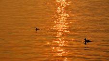 Free Water, Reflection, Sea, Orange Stock Photos - 110551583