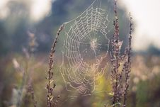 Free Spider Web, Water, Moisture, Morning Stock Photos - 110551663