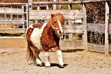 Free Horse, Horse Like Mammal, Mane, Mustang Horse Royalty Free Stock Photo - 110614025