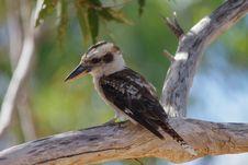 Free Bird, Beak, Fauna, Wildlife Stock Image - 110614111
