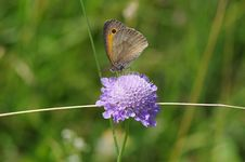 Free Butterfly, Moths And Butterflies, Insect, Brush Footed Butterfly Royalty Free Stock Photography - 110614307