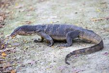 Free Reptile, Terrestrial Animal, Fauna, Scaled Reptile Stock Images - 110614324